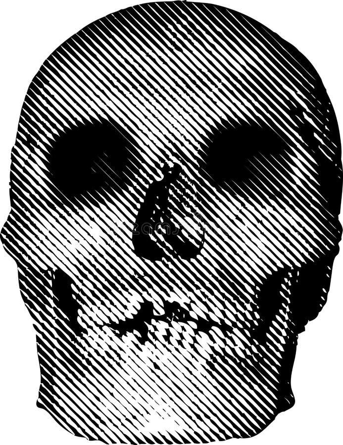 Schädellinie vektor abbildung