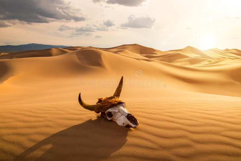 Schädelstier in der Sandwüste bei Sonnenuntergang Das Konzept des Todes und Ende des Lebens lizenzfreie stockfotos