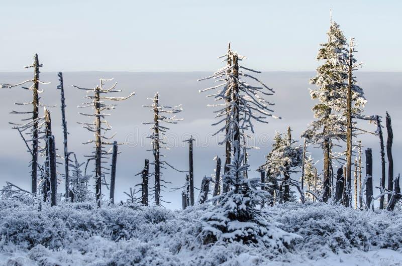 Schädigende Bäume mit Umstellung verwittern, riesige Berge stockfoto