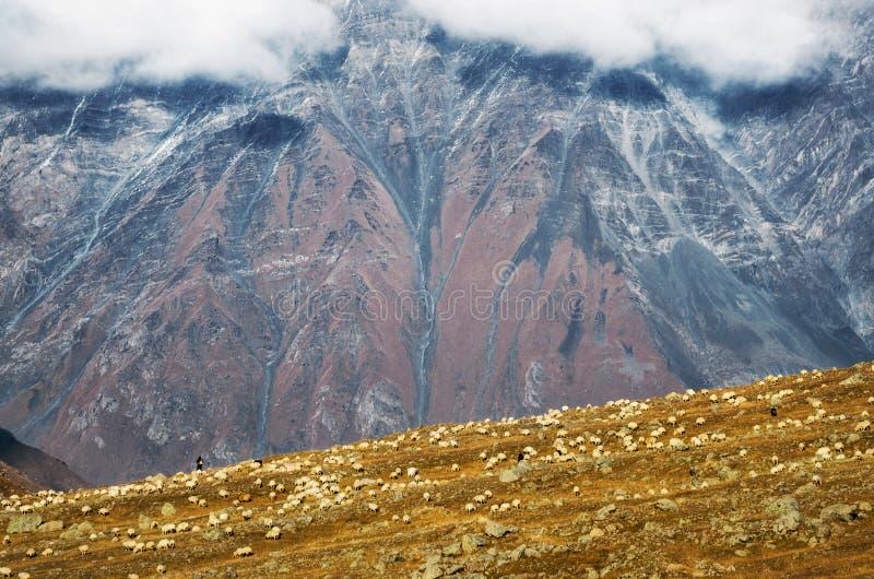 Schäfer lebt Schafe auf Hügel gegen Berg, Georgia in Herden lizenzfreies stockfoto