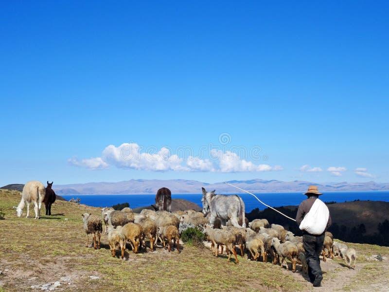 Schäfer mit Herde auf Isla del Sol, Bolivien stockfotos