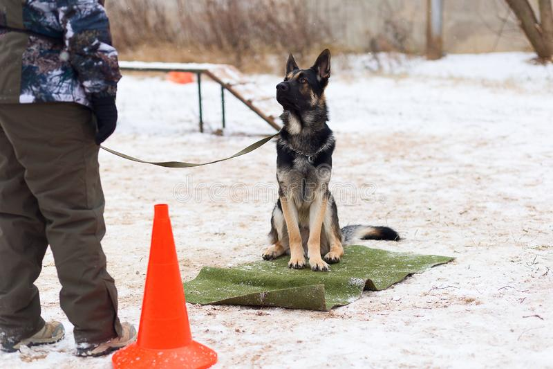 Schäferhund, der ergeben im Winter am Training sitzt lizenzfreie stockfotografie