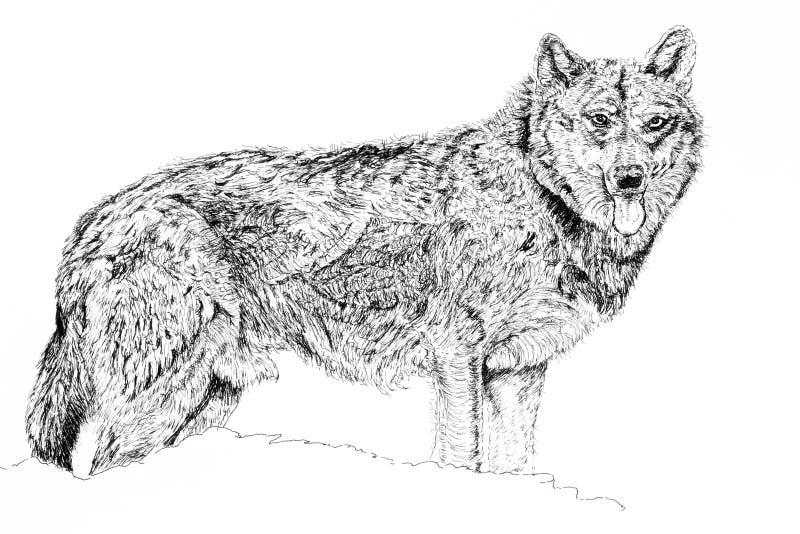 Schäferhund-Hund stock abbildung