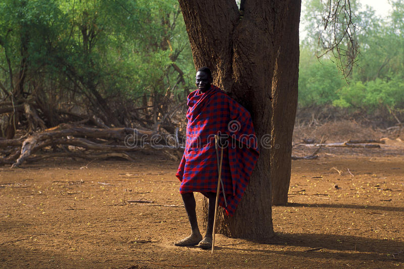 Schäferhund Turkana (Kenia) lizenzfreie stockfotos