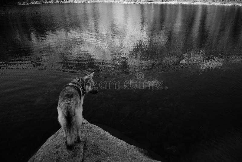 Schäferhund und heisere Mischung lizenzfreies stockfoto