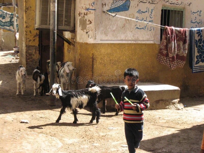 Schäferhundjunge. Ägypten lizenzfreie stockfotografie
