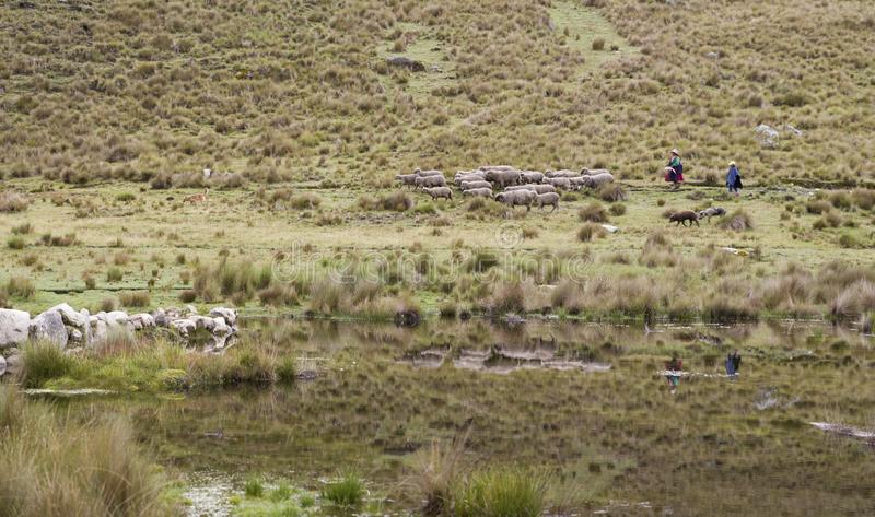 Schäferin und Tochter mit Schafen in Lagune Anden Peru lizenzfreie stockfotos