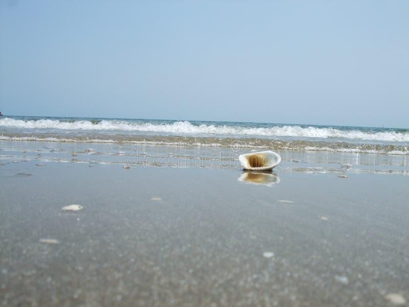 Schälen am Strand stockbild