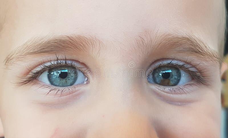 Schätzchen-blaue Augen lizenzfreie stockfotos