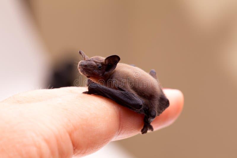 Schätzchen-Hieb, der auf Finger sitzt stockfotos