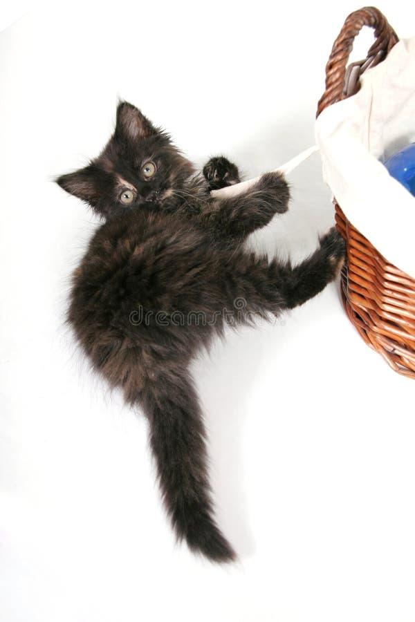 Schätzchen-schwarzes Kätzchen lizenzfreies stockbild