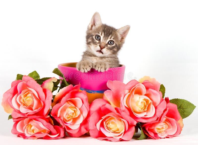 Schätzchenkatze stockfotografie