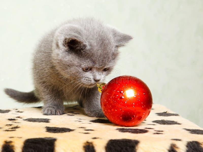 Schätzchenkatze mit Weihnachtsdekoration stockbilder