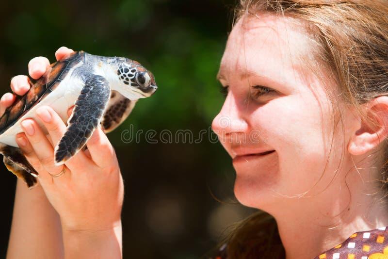 Schätzchenseeschildkröte stockfoto
