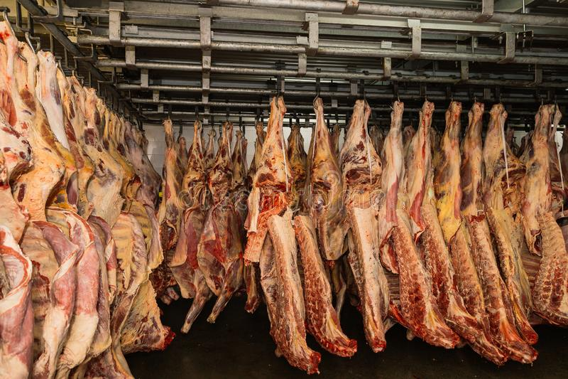 Schładzający magazyn, wiesza haczyki zamarznięci jagnięcy ścierwa Halal cięcie obrazy stock