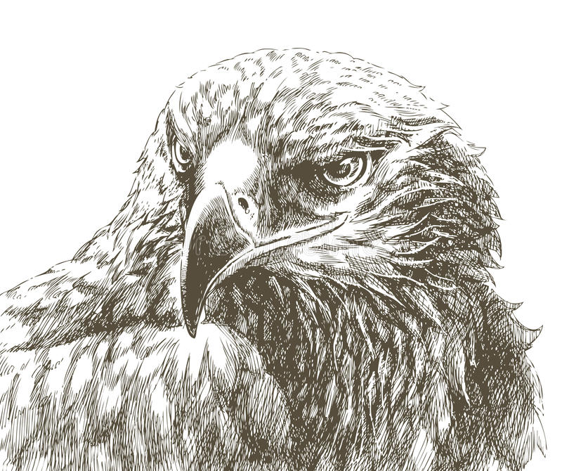Schéma aigle illustration stock