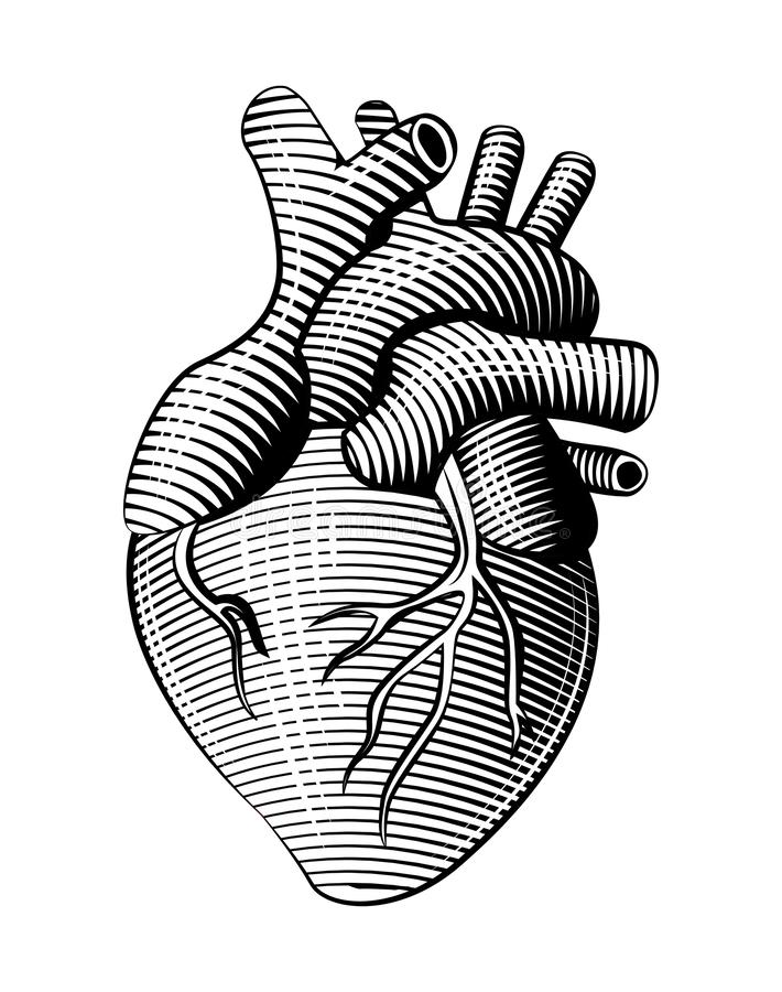 Schéma humain coeur de style de gravure sur bois illustration de vecteur