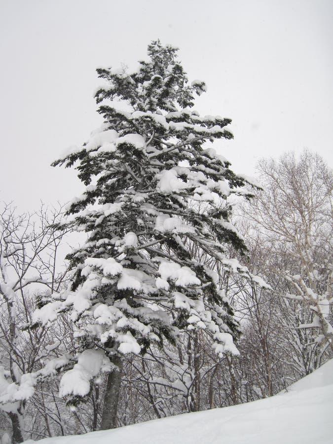 Schön bedeckte malerischer Schnee die Bäume und folgte schweren Schneefällen stockbilder
