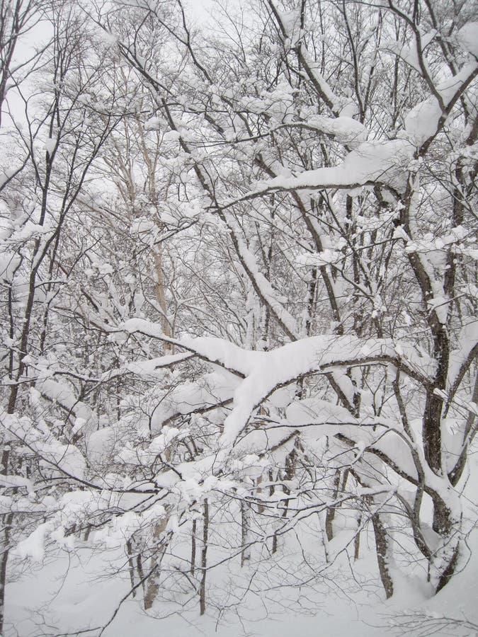 Schön bedeckte malerischer Schnee die Bäume und folgte schweren Schneefällen lizenzfreies stockfoto