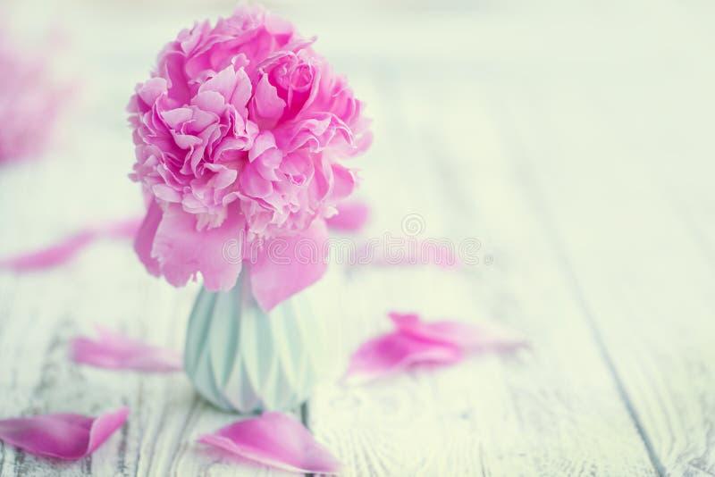 Schön erblassen Sie - rosa Pfingstrosenblumenstrauß im Vase über weißem Tabellenhintergrund stockfoto