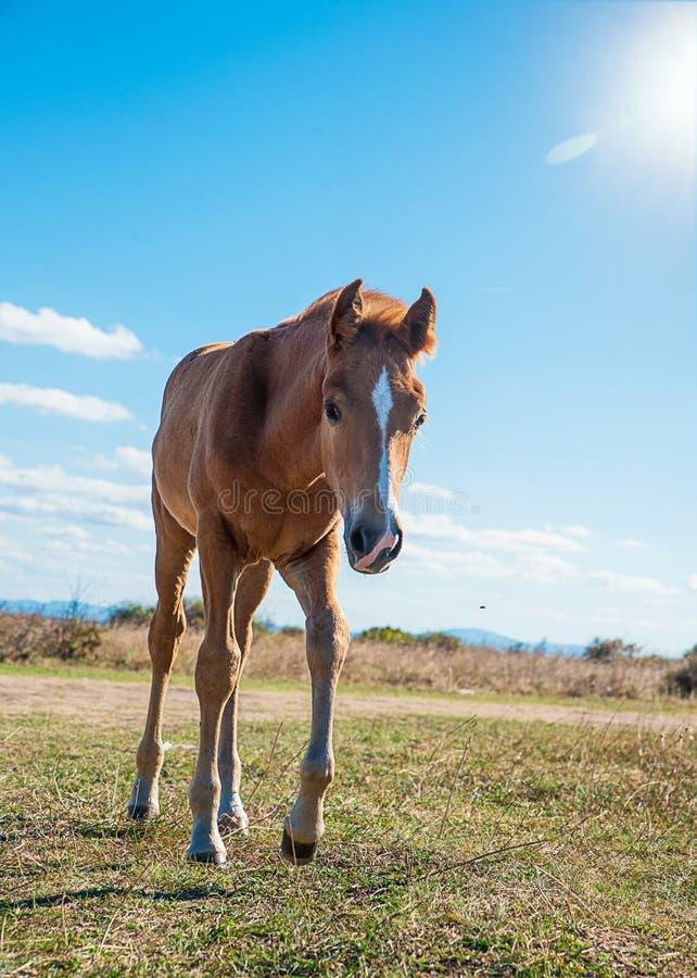 Schön gepflegte Pferde stockbild