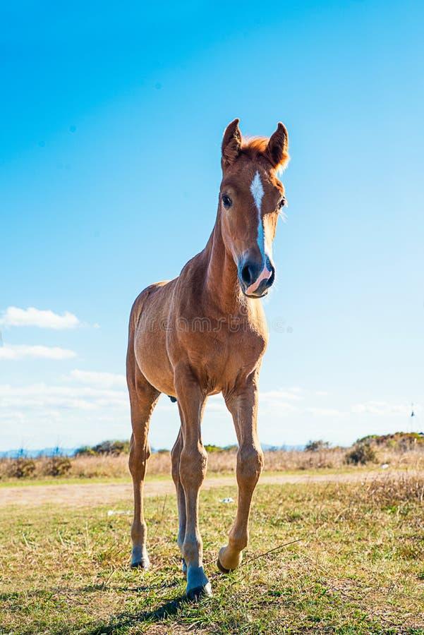 Schön gepflegte Pferde stockfotos