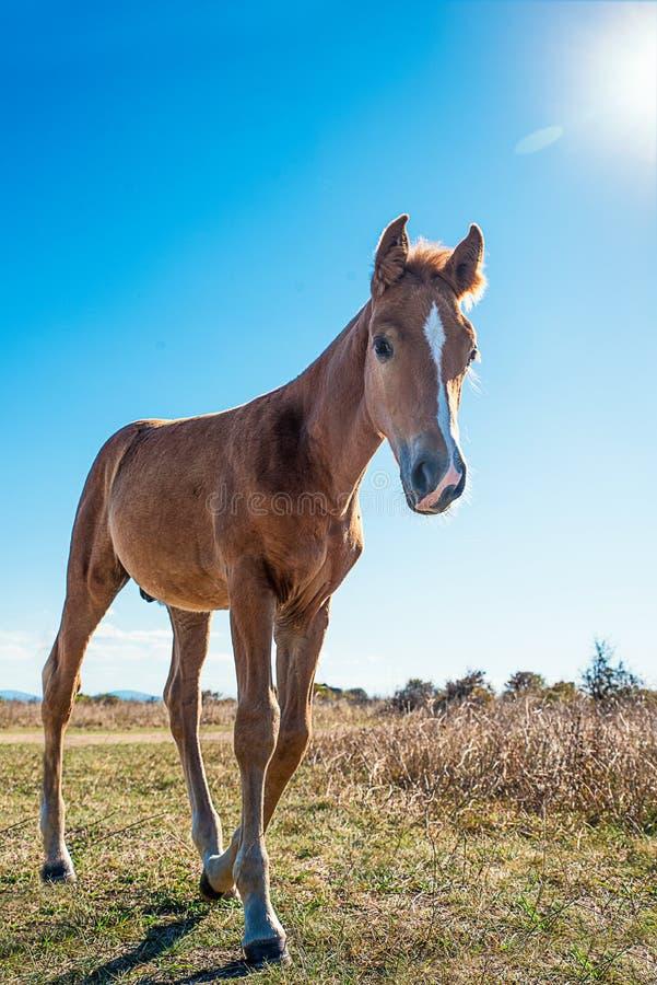 Schön gepflegte Pferde lizenzfreies stockfoto