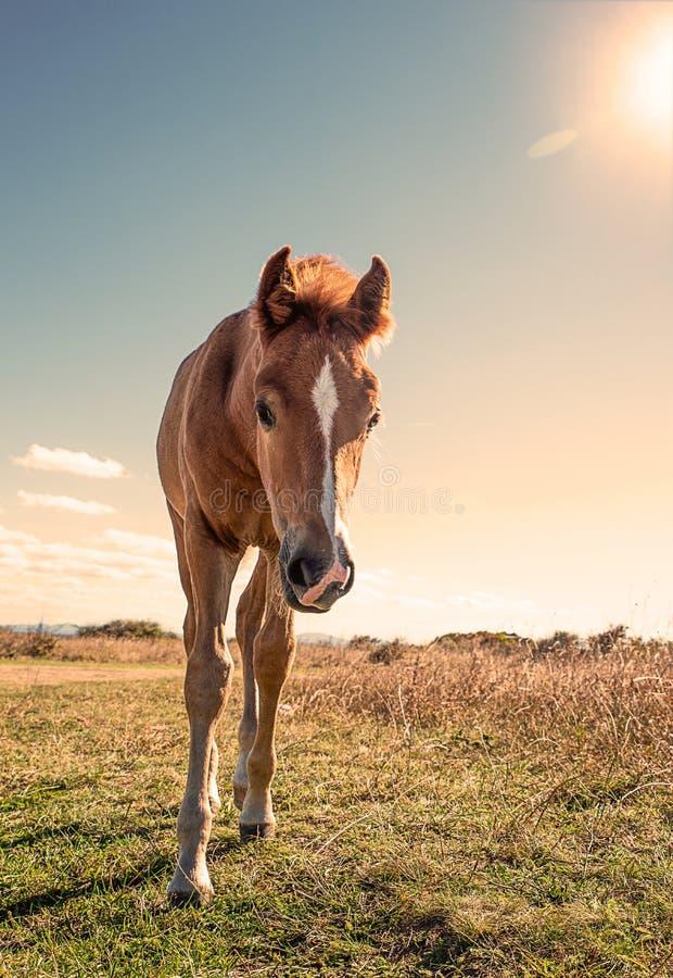 Schön gepflegte Pferde lizenzfreies stockbild