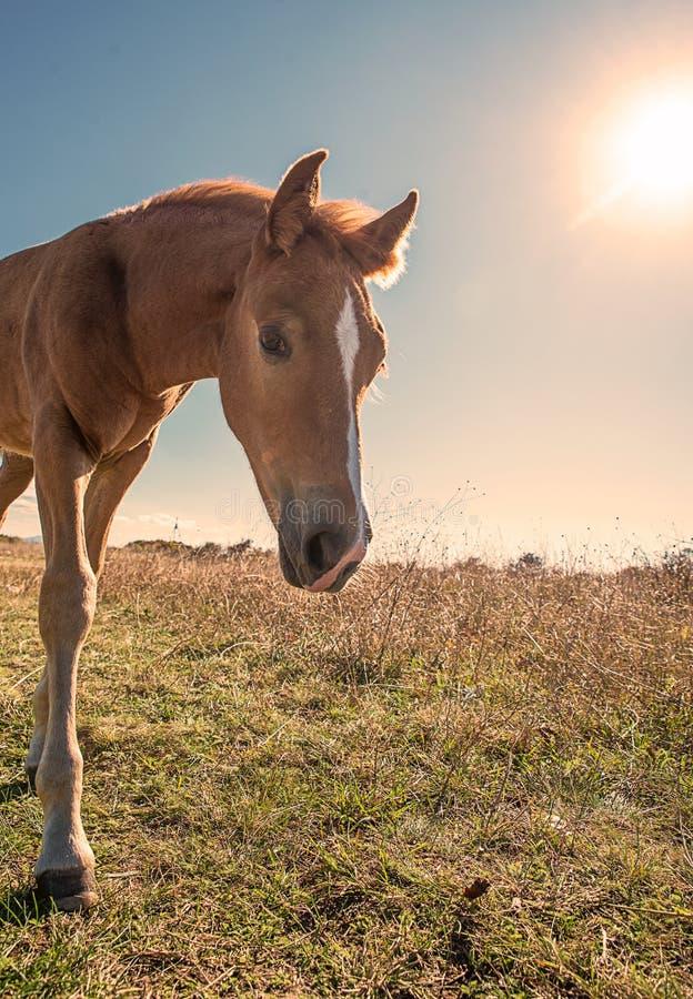 Schön gepflegte Pferde stockfoto
