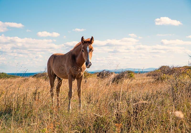 Schön junge Pferde stockfotografie