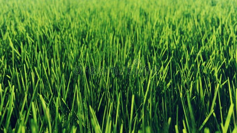 Schön vom grünen Gras des Morgens Wiedergabe 3d stock abbildung