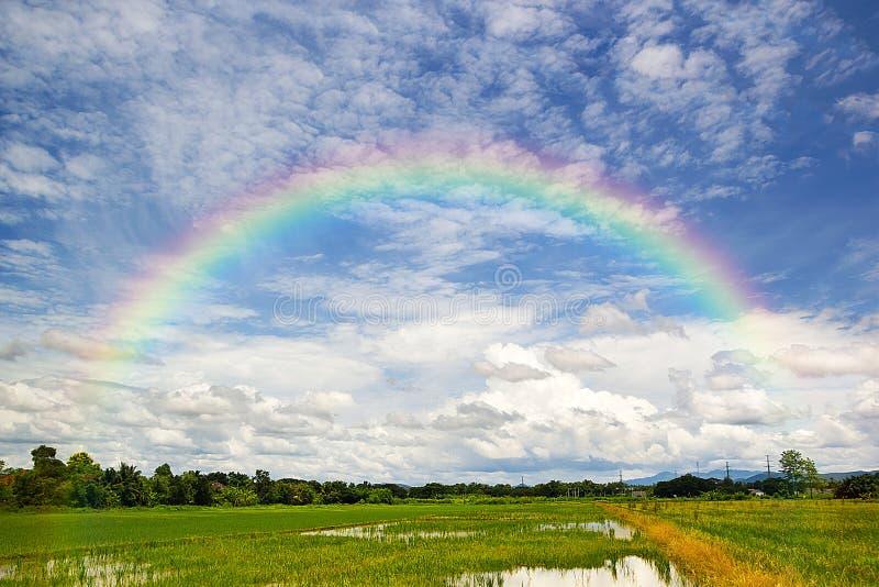 Schön vom Regenbogen im blauen Himmel vorbei des grünen Reis-Feldes in lizenzfreie stockfotos