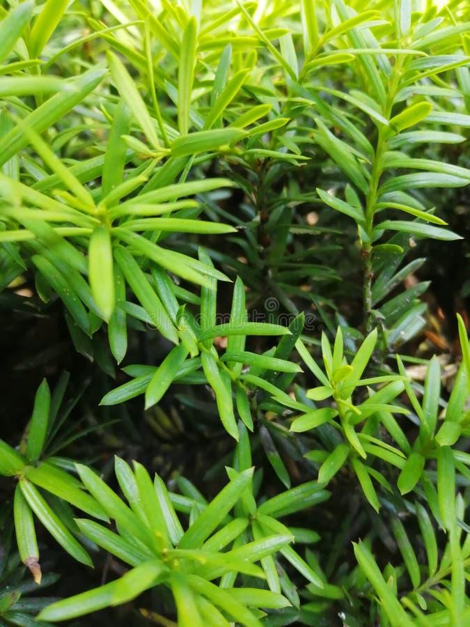Schön von den grünen Blättern für unterschiedlichen Entwurf lizenzfreies stockbild