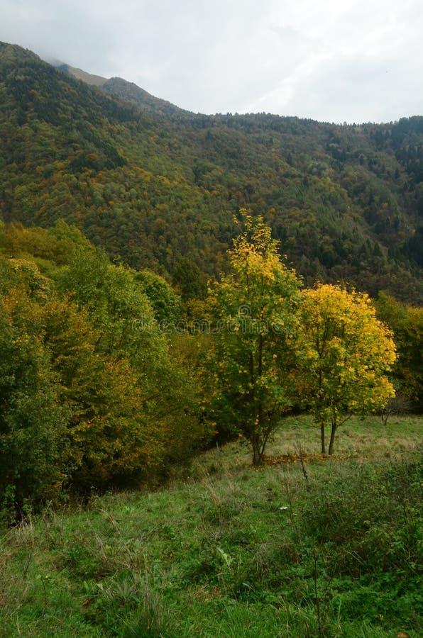 Schöne üppige grüne und gelbe Blätter im Wald lizenzfreies stockfoto