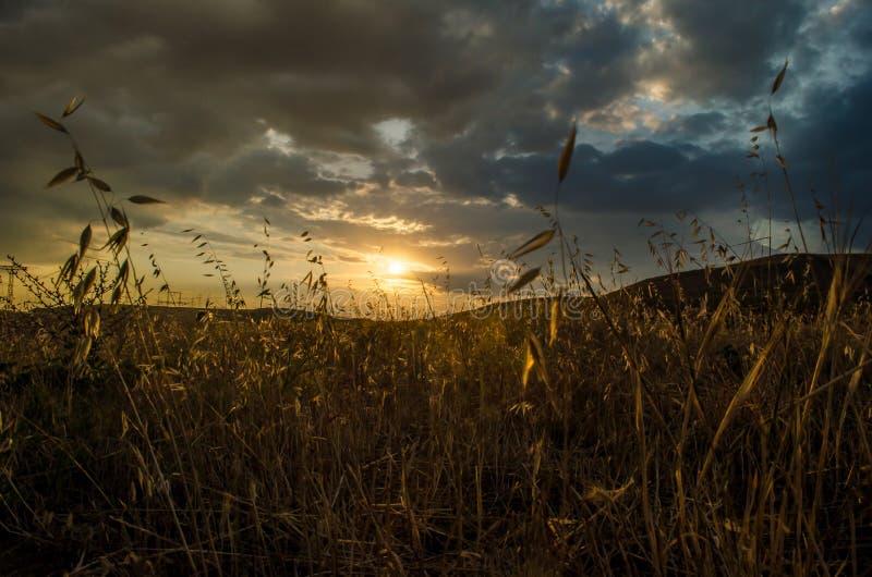 Schöne Abendansicht der Wiesen und der Hügel des Aserbaidschan-Gebirgsgrünen Grases zur Sonnenuntergangzeit sommerzeit stockbilder