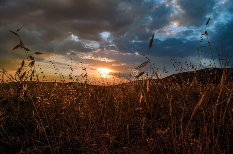Schöne Abendansicht der Wiesen und der Hügel des Aserbaidschan-Gebirgsgrünen Grases zur Sonnenuntergangzeit sommerzeit stockfotografie