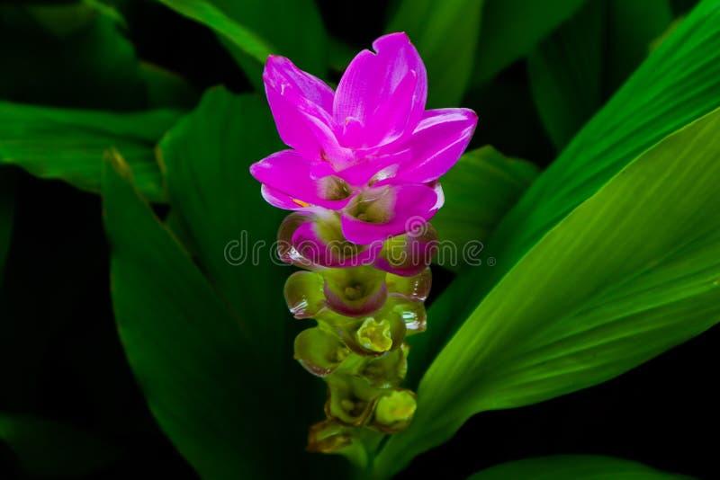 Schöne abstrakte Beschaffenheitsfarbrote purpurrote und rosa Blumenbaumbetriebs- und -waldlandschaft in der allgemeinen Naturgrün lizenzfreie stockbilder