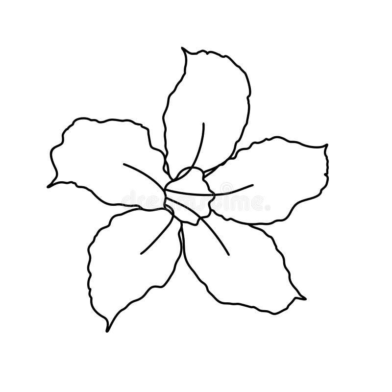Schöne Adenium-Blumen-Linie Kunst Eine Linie Grafik, unbedeutende Konturn-Zeichnung - Vektor stock abbildung