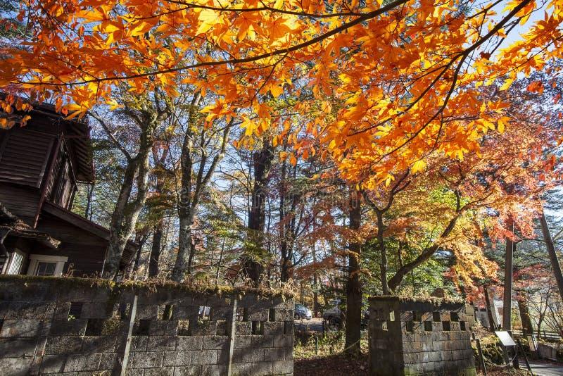 Schöne Ahornjahreszeit in Kumoba-Teich, Karuizawa, Japan stockbilder