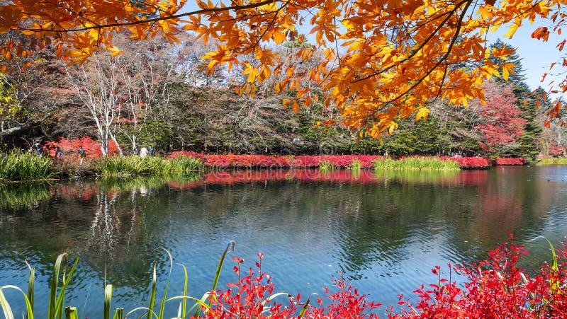 Schöne Ahornjahreszeit in Kumoba-Teich, Karuizawa, Japan stockbild