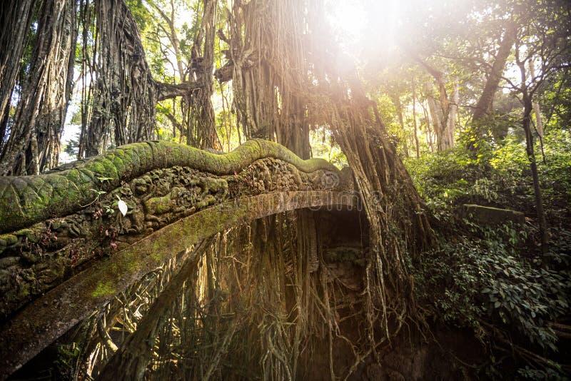 Schöne alte Brücke im heiligen Affe-Wald mit Moos stockfotografie