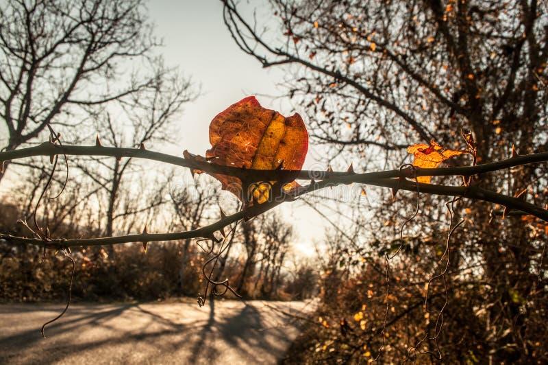Schöne Ansicht der Niederlassung mit Gelb verlässt gegen das Sonnenlicht Aserbaidschan, Kaukasus stockbilder