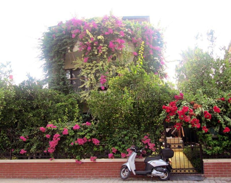 Schöne Ansicht des blühenden Gartens und des motobike lizenzfreies stockbild