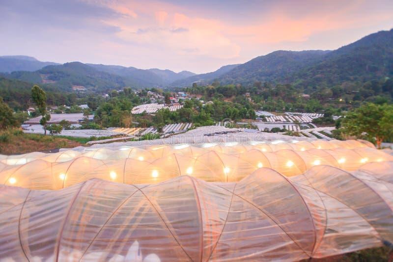Schöne Ansicht des Gewächshauses im tropischen Wald in der Dämmerung Blumenanlagen, die innerhalb des Gewächshauses wachsen Organ stockbild