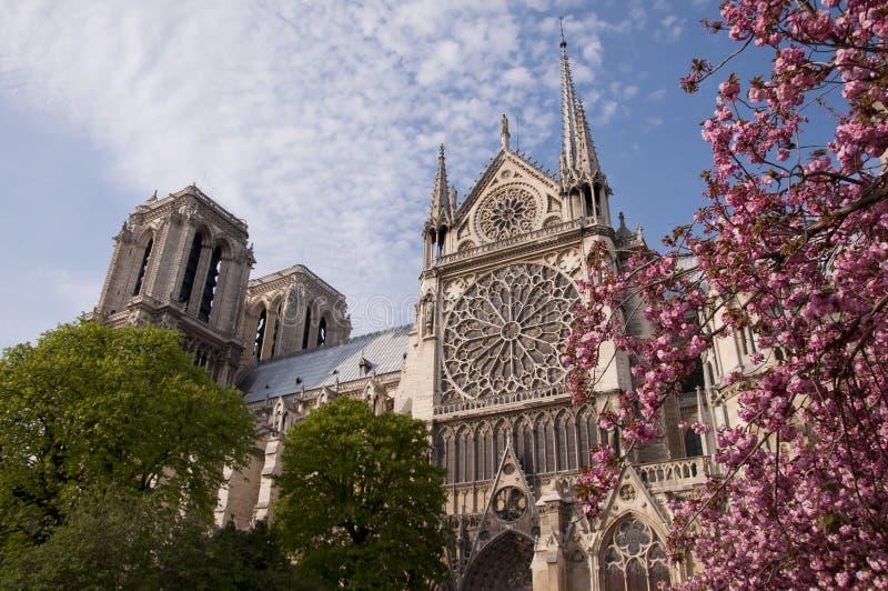 Schöne Ansicht des Notre Dame mit Blüten stockbilder