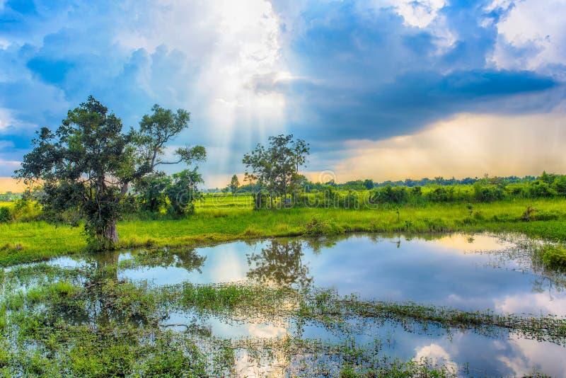 Schöne Ansicht des Reisfeldes Schöne Ansicht des Reisfeldes und blauer Himmel bewölken sich stockfotos