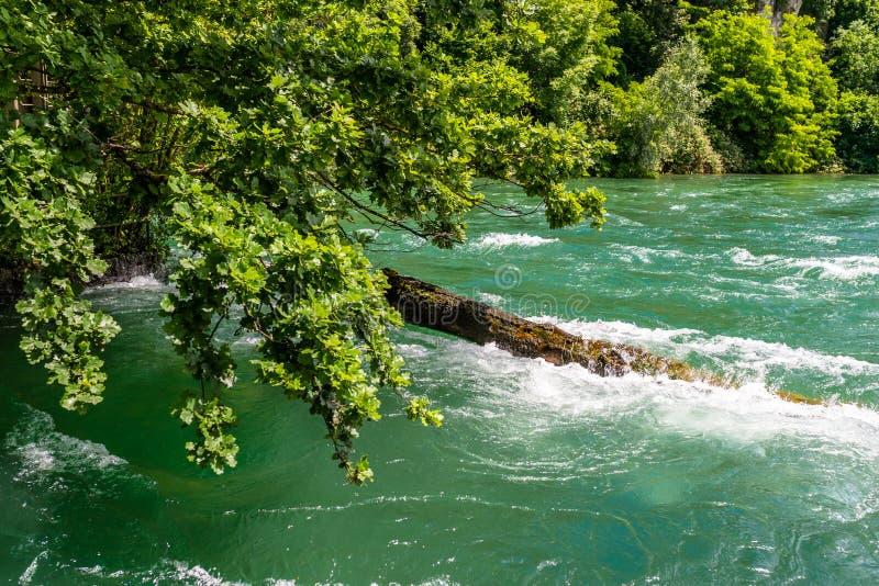 Schöne Ansicht des Rheins im Türkis, an der Quelle in der Schweiz, gerade hinter dem größten Wasserfall in Europa lizenzfreies stockfoto