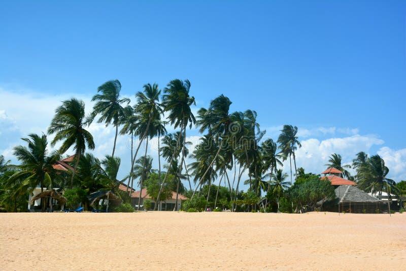 Schöne Ansicht des tropischen Strandes mit Kokosnusspalmebäumen, Sri Lanka stockbild