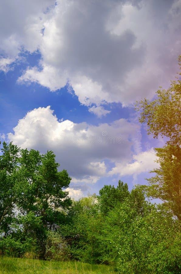 Schöne Ansicht in die Waldlichtung Bäume, grünes Gras, blaue Wolken Naturtapete Frühling, Sommer, Sonnenwärme stockfoto