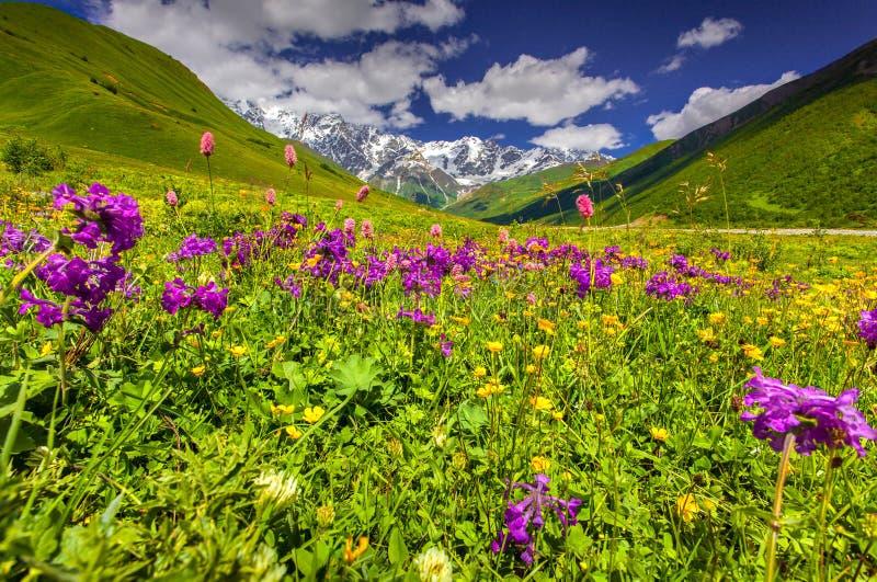 Schöne Ansicht von Alpenwiesen im Kaukasus lizenzfreie stockfotos